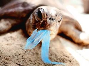 Prohibición de bolsas plásticas | ahora!