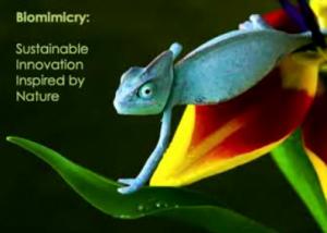 Biomimicry: innovación sustentable inspirada por la naturaleza …